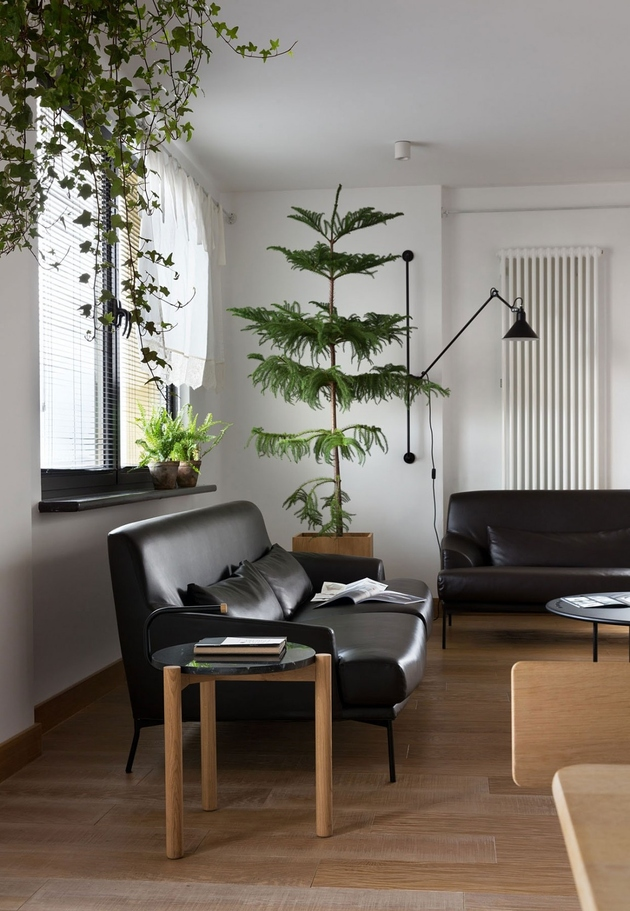 12-apartment-plants-air-purification.jpg