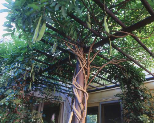 asla-tea-garden-4.jpg