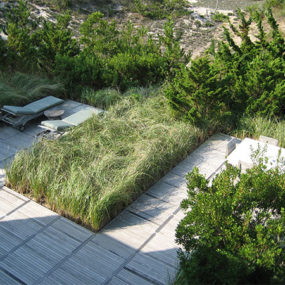 Dunescape for a fragile sand dune ecology in Long Island, New York