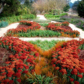 Drought Tolerant Garden Design by Eckersley Garden Architecture