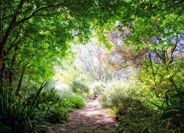 drought-tolerant-garden-design-eckersley-4.jpg