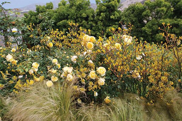 pamela-burton-award-landscape-7.jpg